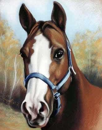 Animalier-jument-pastel-diane-berube